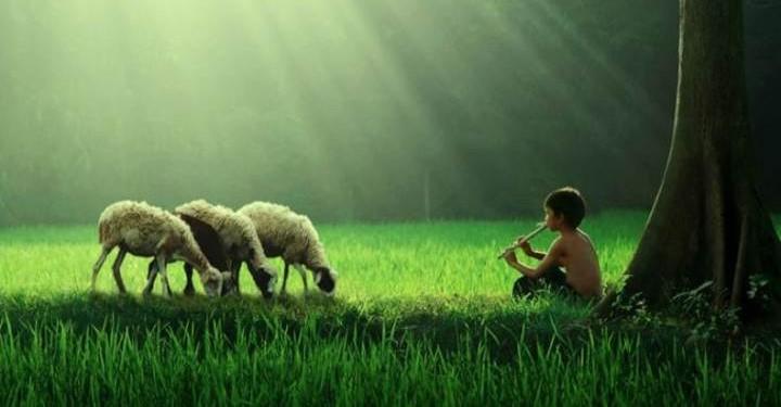 anak-gembala-kambing