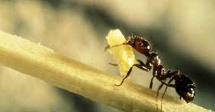kisah ulat buta semut katak